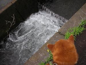 ザンザン流れる用水路