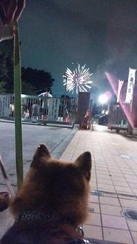 花火を見る2