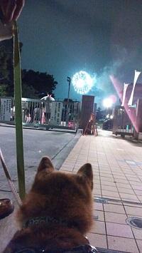 花火を見る1