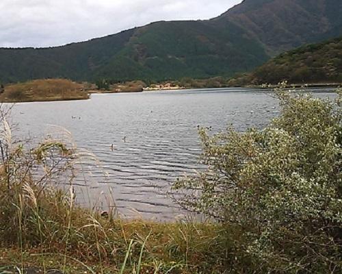 田貫湖一周遊歩道 大きな鳥