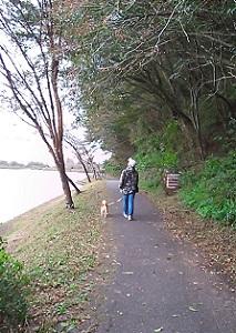 田貫湖遊歩道