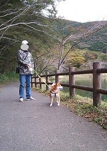 富士を眺める柴犬