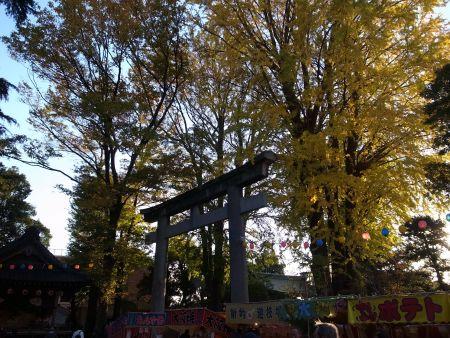葛西神社の銀杏
