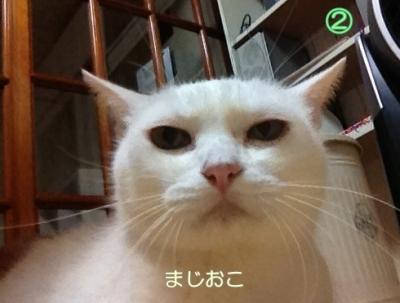 neko20131022-2.jpg