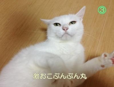 neko20131022-3.jpg