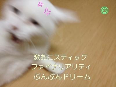 neko20131022-6.jpg