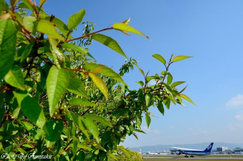 伊丹25新緑 (5)