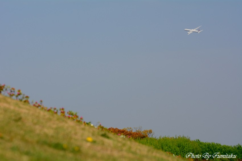 伊丹251新緑 (1)