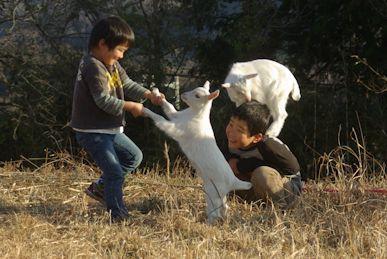 ヤギと踊る