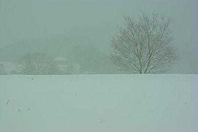 大雪の上秦野