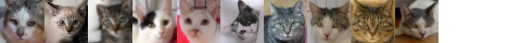 130910cats-s