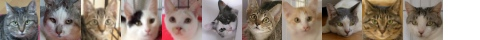 130922cats-s