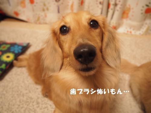 002_convert_20140122214048.jpg