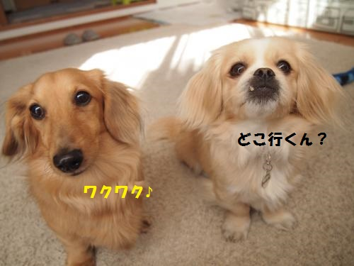 005_convert_20140131154518.jpg