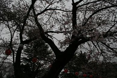 120422 譁ー豁薙♀闃ア隕・IMG_0611