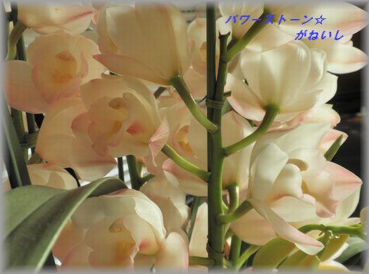 蘭の花のあっぷ