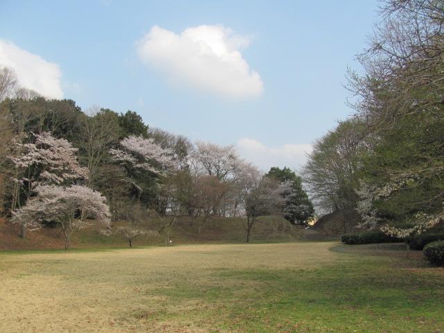 勝山城桜平成25年4月5日c