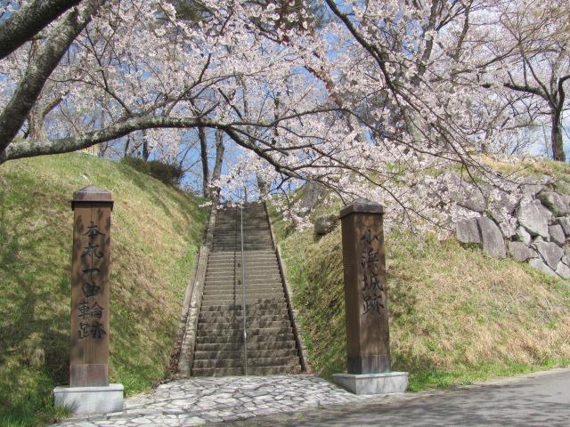 小浜城桜平成25年4月15日c