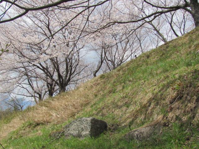 小浜城平成25年4月15日g