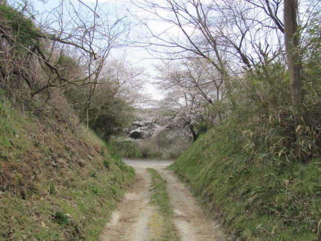 小浜城平成25年4月15日r