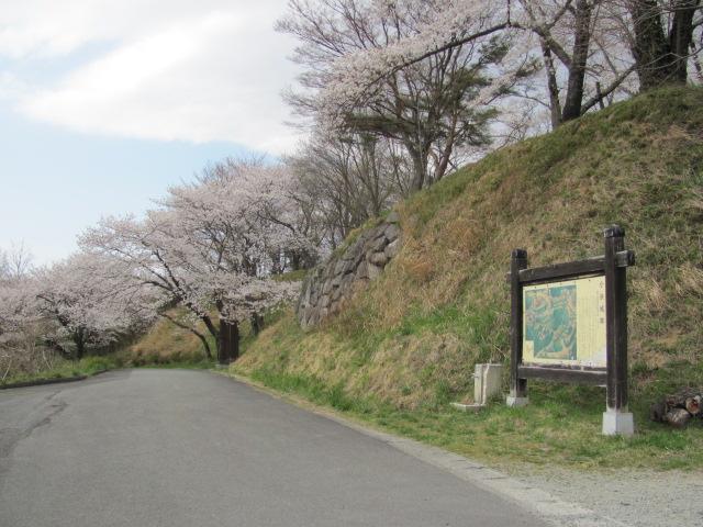 小浜城桜平成25年4月15日d