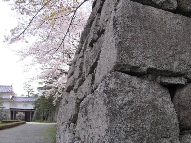 二本松城桜平成25年4月15日a