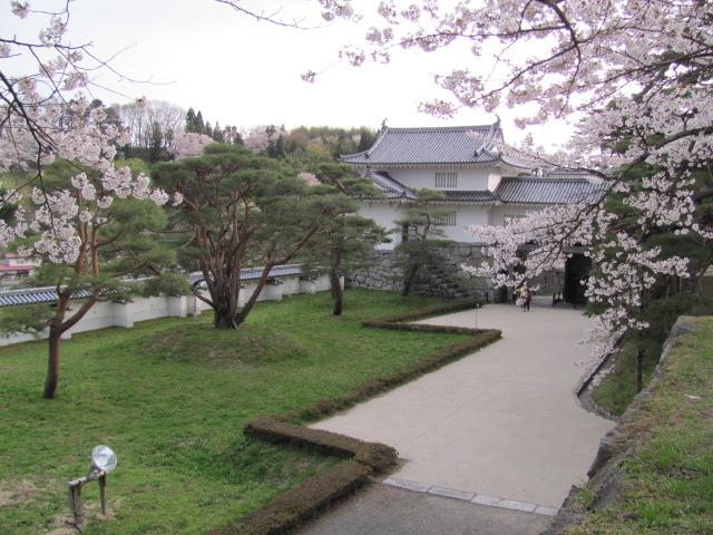 二本松城桜平成25年4月15日b