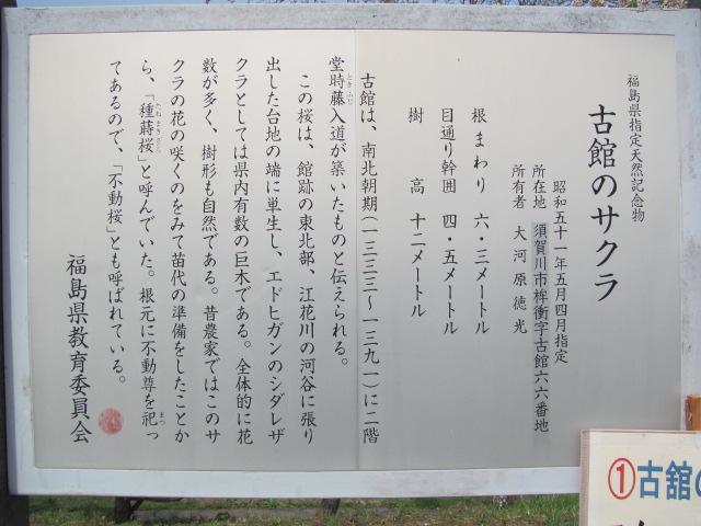 桙衝館の桜平成25年4月17日b