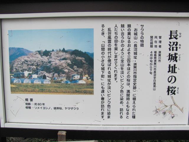 長沼城の桜平成25年4月17日a