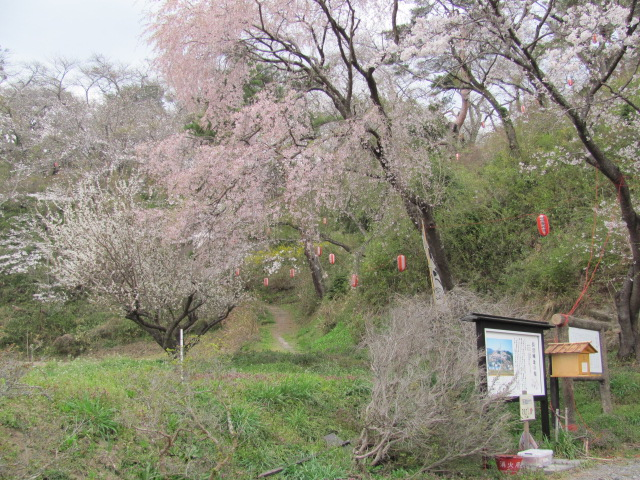 長沼城の桜平成25年4月17日b