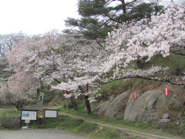 長沼城の桜平成25年4月17日d