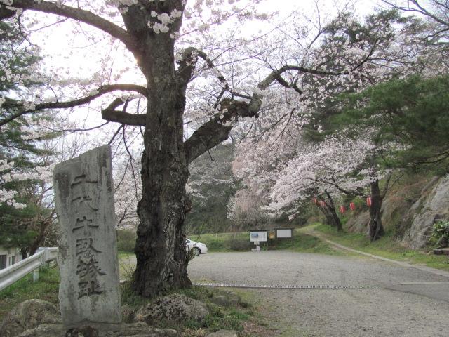 長沼城の桜平成25年4月17日e