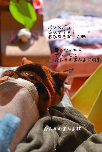 1412_2378a.jpg