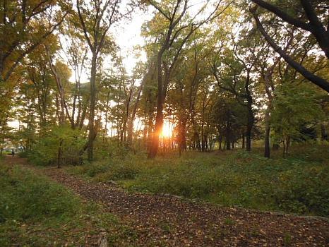 木漏れ日の夕陽