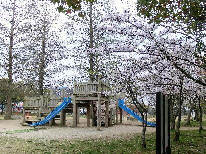 130404-公園の桜-1