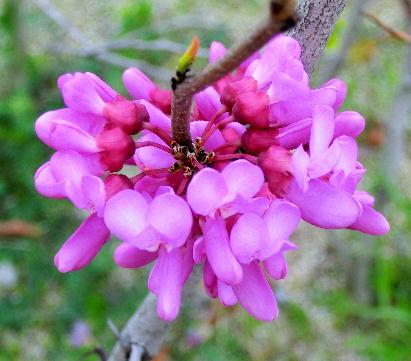 130403-船戸池公園の花-6