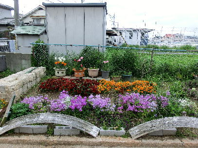 130403-船戸池公園の花-2