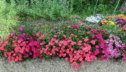 130513-公園の花-2
