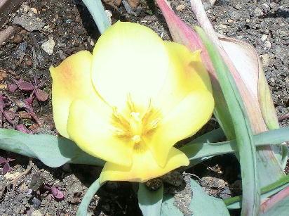 130516-我が家の花-2