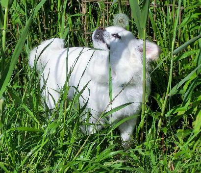 130525-草を食べる-8