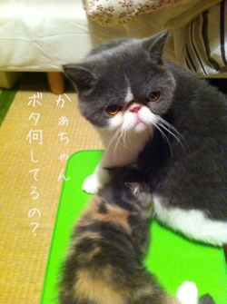 fc2blog_201308171422441fa.jpg