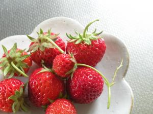 first pick of strawberries