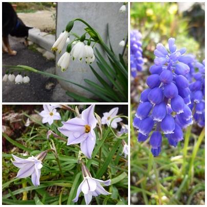 春ですね~~