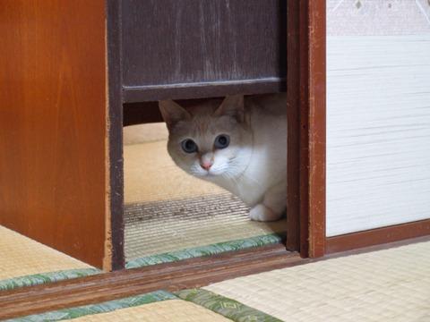在りし日の華さん(2010.10.11)