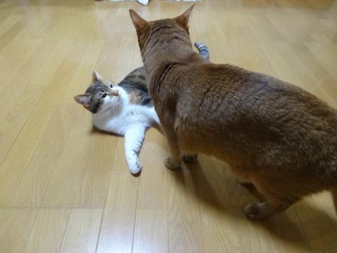 撫子さんがジョゼフィン嬢に挑んでいます(2014.12.01)