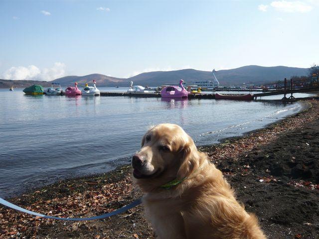 山中湖とスワンカイ