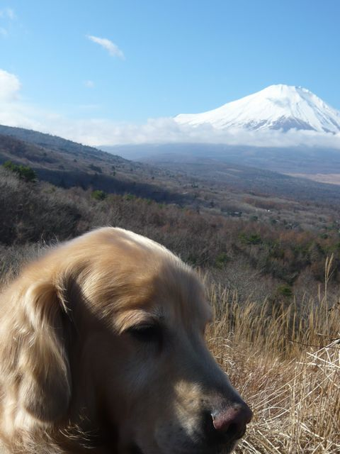 アトムと富士山3カイ