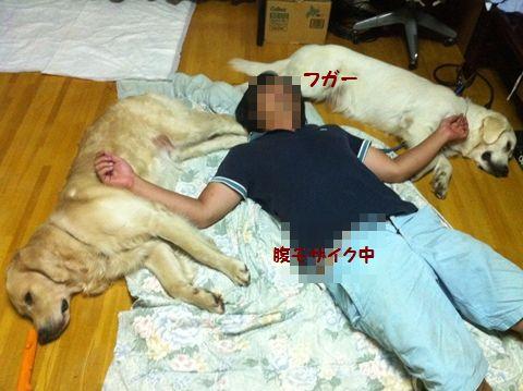20110817-10_R.jpg