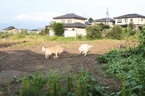 20110817-5_R.jpg