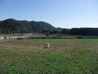 2013_1027服部牧場0001